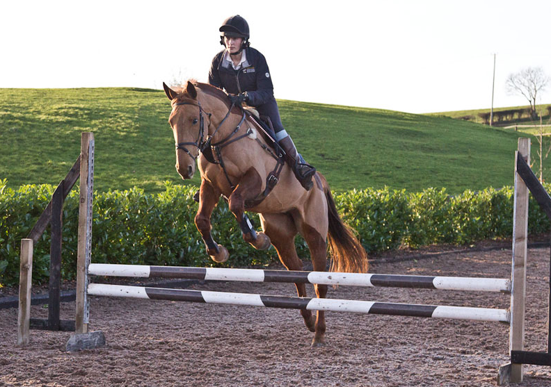 Young_horse_jumping