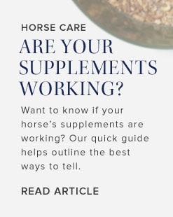 Horse Care Are Your Supplements Working?
