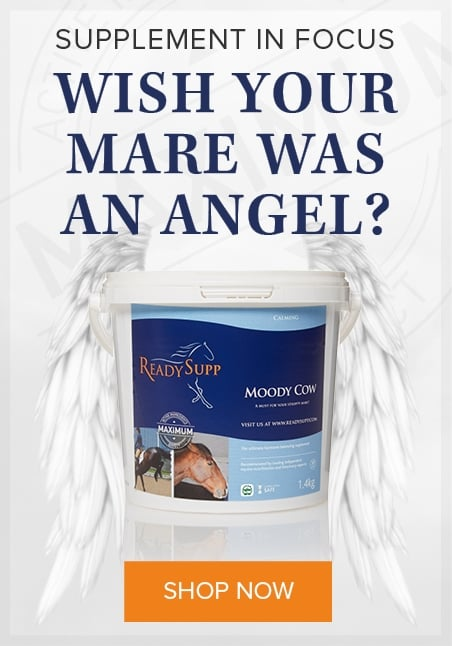 Wish Your Mare Was An Angel?